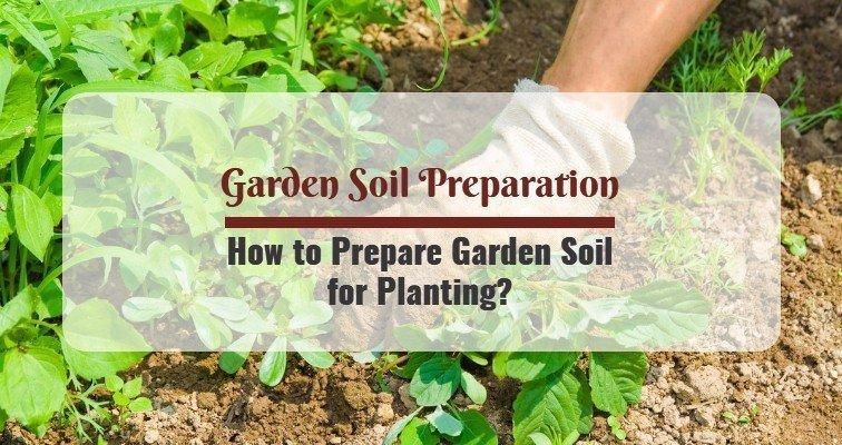How to Prepare Garden Soil for Planting?