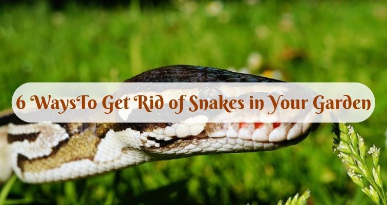 6 WaysTo Get Rid of Snakes in Your Garden