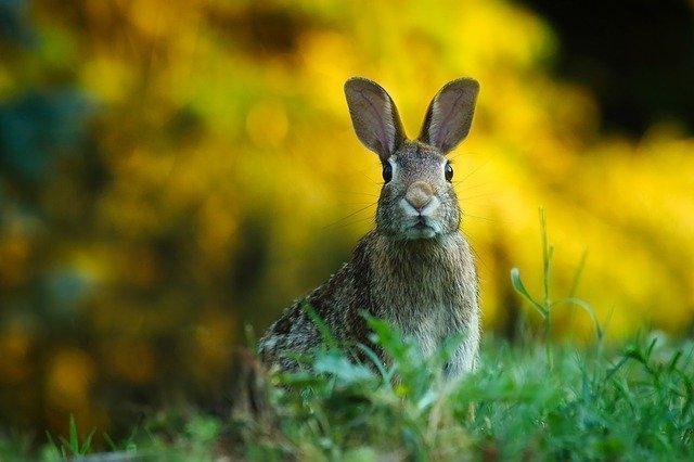 A rabbit in our garden