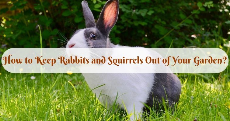 How to keep rabbits and squirrels out of your garden - How to keep rabbits out of garden ...