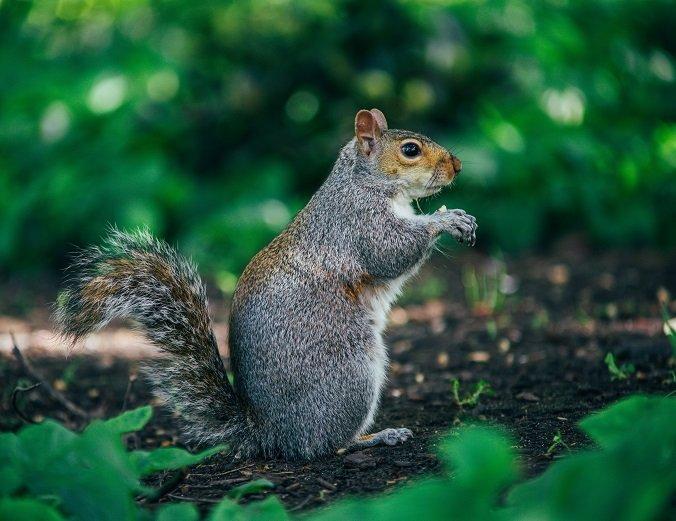 a squirrel in a garden