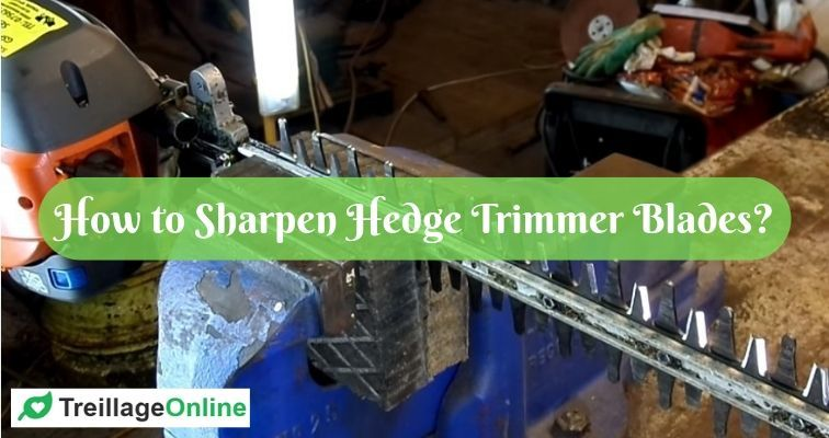 How to Sharpen Hedge Trimmer Blades