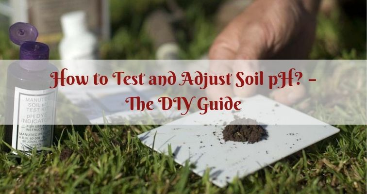How to Test and Adjust Soil pH