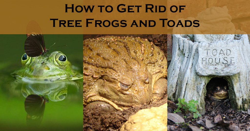 How to Get Rid of Tree Frogs and Toads?
